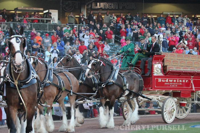 clydesdales2